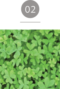 クリーム;エッセンシャル PLANT VITALIZIN