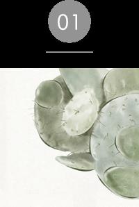 クレンジングウォーター;ビークリーン、ビーモイスト サボテンエキス / サボテンシードオイル