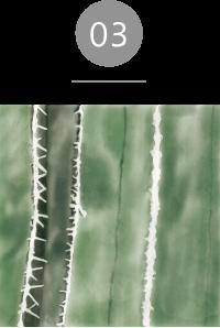 アイクリーム ; コンセントレートオン サボテンセラミド