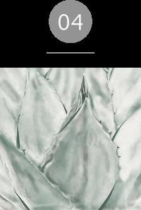 クレンジングフォーム;ディープクリーン、ディープモイスト ブルーアガベエキス