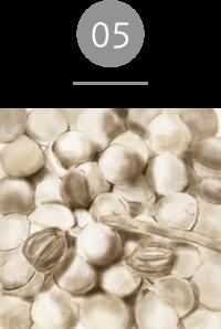 オイル;ライトアンドモア クランベアビシニカ種子油