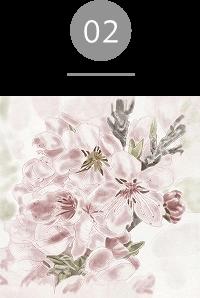 エッセンシャルミスト;センスオブバランス サボテン花エキス